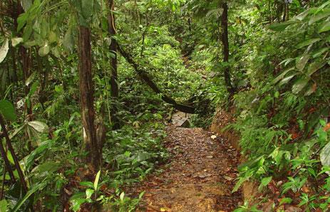 Riding through a rainforest